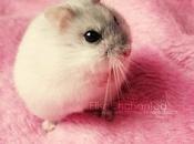 Fotos de Hamster6