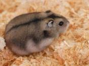 Fotos de Hamster9
