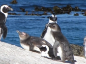 Fotos de Pinguins 11