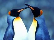 Fotos de Pinguins 13