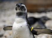 Fotos de Pinguins 14