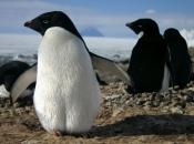 Fotos de Pinguins 16