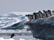 Fotos de Pinguins 17