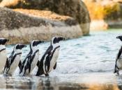Fotos de Pinguins 7