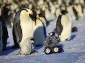 Fotos de Pinguins 2