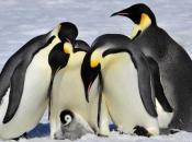Fotos de Pinguins 3
