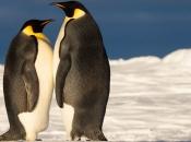 Fotos de Pinguins 5