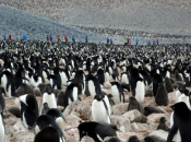 Fotos de Pinguins 6