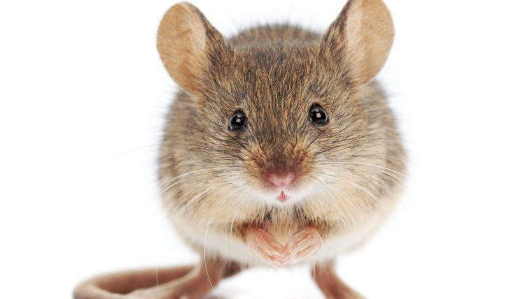 Fotos de Ratos 2
