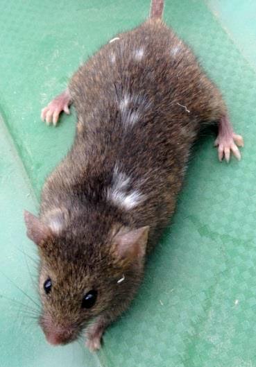 Fotos de Ratos 11