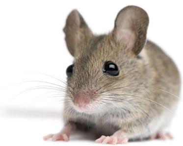 Fotos de Ratos 9