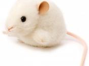Fotos de Ratos 10