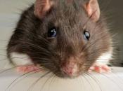 Fotos de Ratos 8