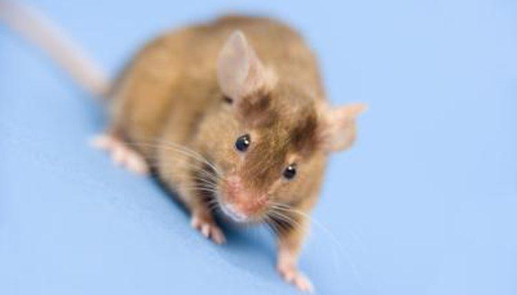Fotos de Ratos 18