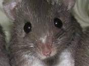 Fotos de Ratos 14