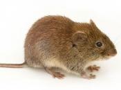 Fotos de Ratos 17