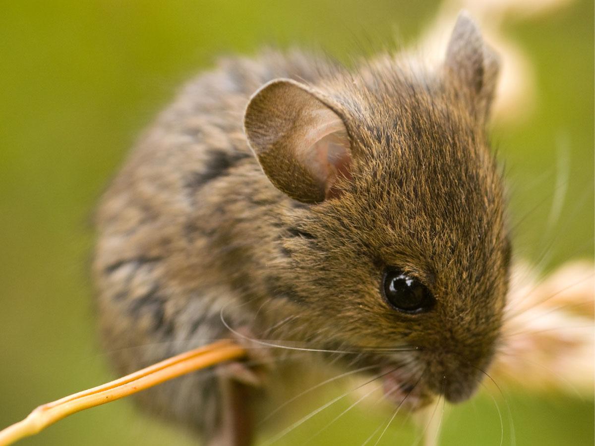 Fotos de Ratos 21