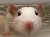 Fotos de Ratos 20