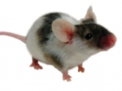 Fotos de Ratos 24