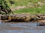 Fotos do Crocodilo do Nilo11