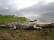 Fotos do Crocodilo do Nilo14