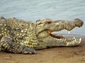 Fotos do Crocodilo do Nilo15
