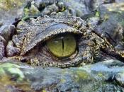 Fotos do Crocodilo do Nilo18