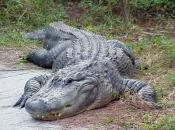 Fotos do Crocodilo do Nilo3