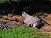 Fotos do Crocodilo do Nilo8