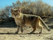 Fotos do Gato da Areia1