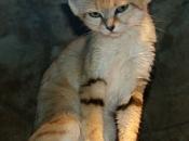 Fotos do Gato da Areia2