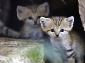 Fotos do Gato da Areia4