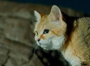 Fotos do Gato da Areia5