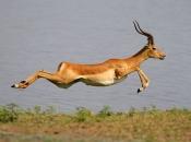 Fotos do Impala1