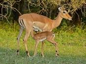 Fotos do Impala2