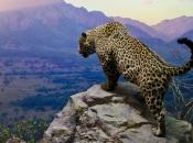 Fotos do Jaguar Animal 11
