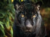 Fotos do Jaguar Animal 15