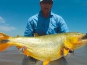 Fotos do Peixe Dourado10