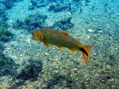 Fotos do Peixe Dourado14