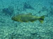 Fotos do Peixe Dourado15