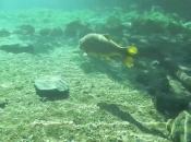 Fotos do Peixe Dourado18