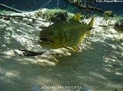 Fotos do Peixe Dourado5