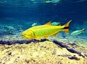 Fotos do Peixe Dourado6