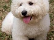 Fotos do Poodle 8