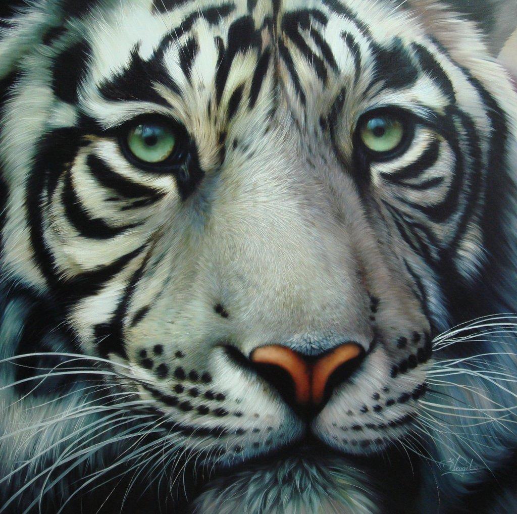 Tigre Branco Caracteristicas E Fotos Portal Dos Animais