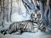 Fotos do Tigre Branco12