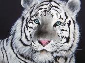 Fotos do Tigre Branco13