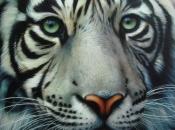 Fotos do Tigre Branco15