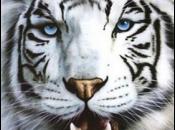 Fotos do Tigre Branco2
