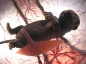 Gestação dos Mamíferos 4